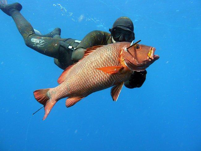 Маленькие секреты подводного охотника