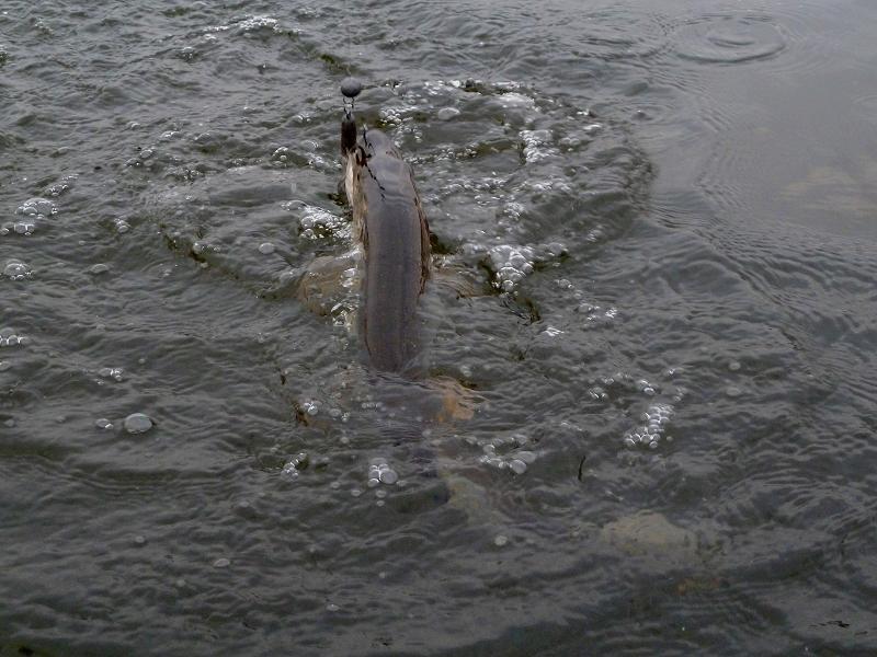 Как рыба клюет под дождем