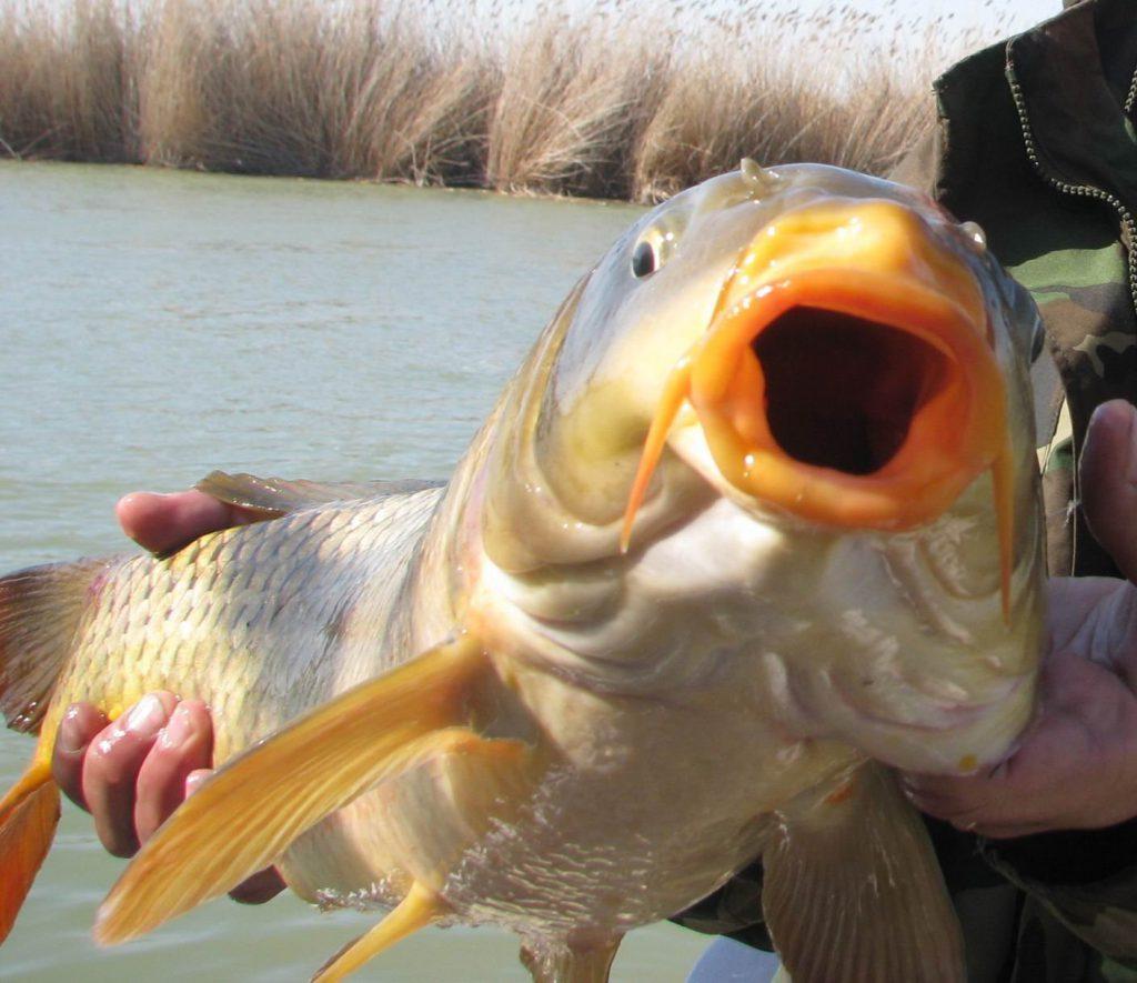 Рыбалка на сазана весной