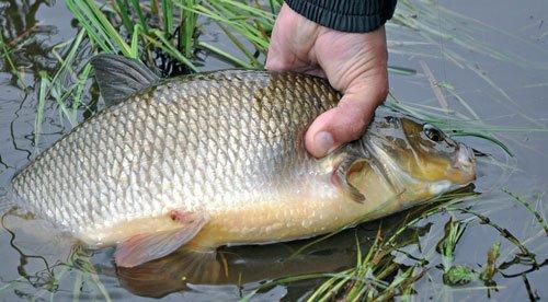 Рыбалка язь