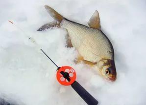 зимняя ловля леща видео