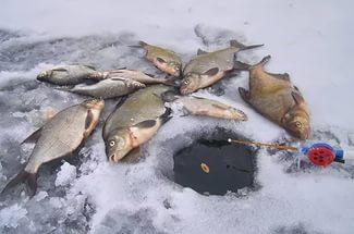 Зимняя ловля леща на реке