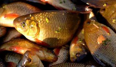 рыбалка летом видео