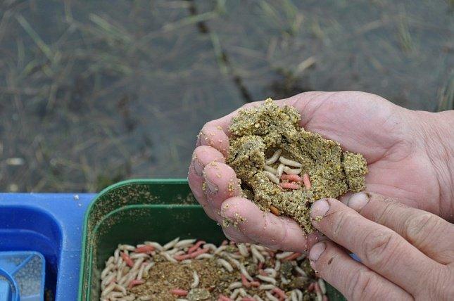 Прикормка для линя из крупы и червей